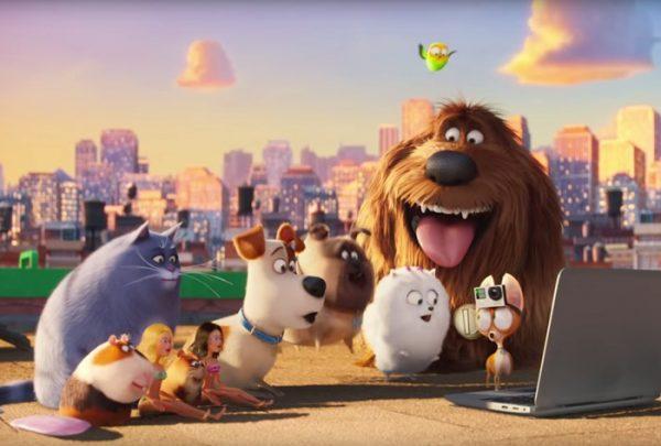 Анкеты домашних животных, желающих сниматься в кино и рекламе