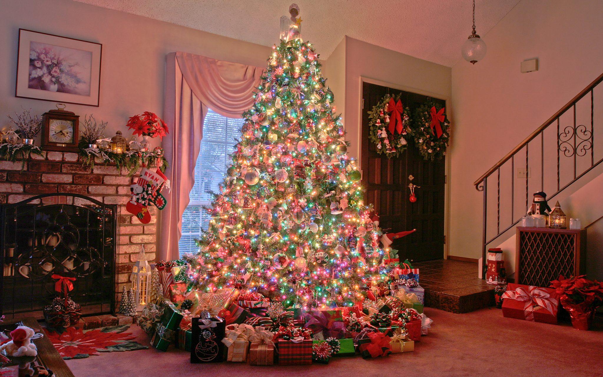 Новогодние живые ёлки в онлайн-магазине