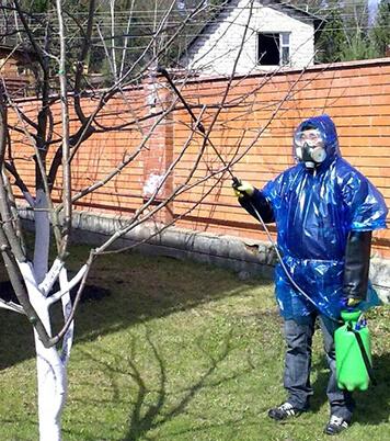Застосування мідного купоросу у саду